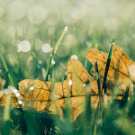 A leaf, lying on the grass