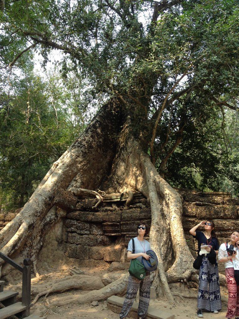 A tree growing among the walls at Ta Prohm temple, Angkor Wat