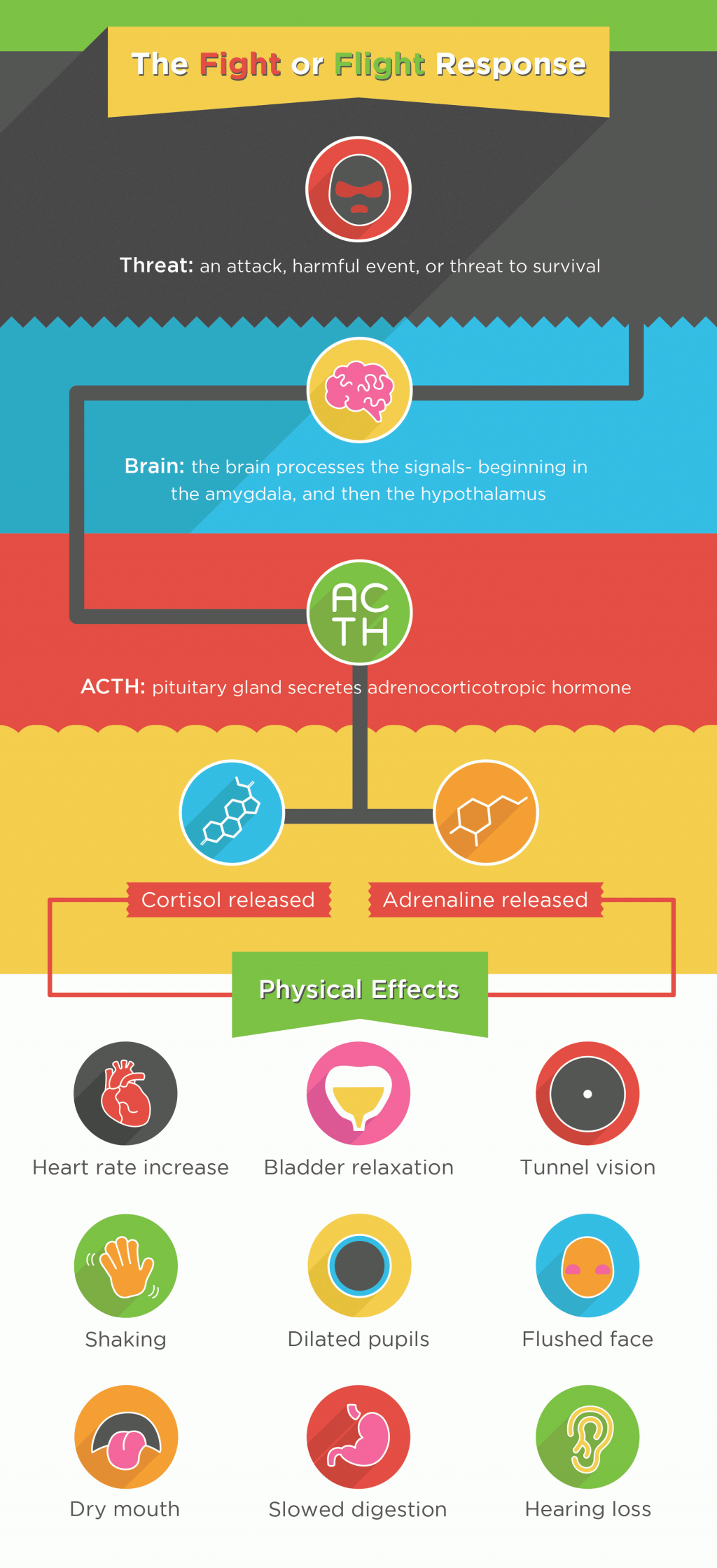 An infographic showing the fight or flight response, the body's response to stress