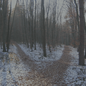 A crossroads in the woods, a path in the snowy ground splitting in two. Two paths to take between the trees.